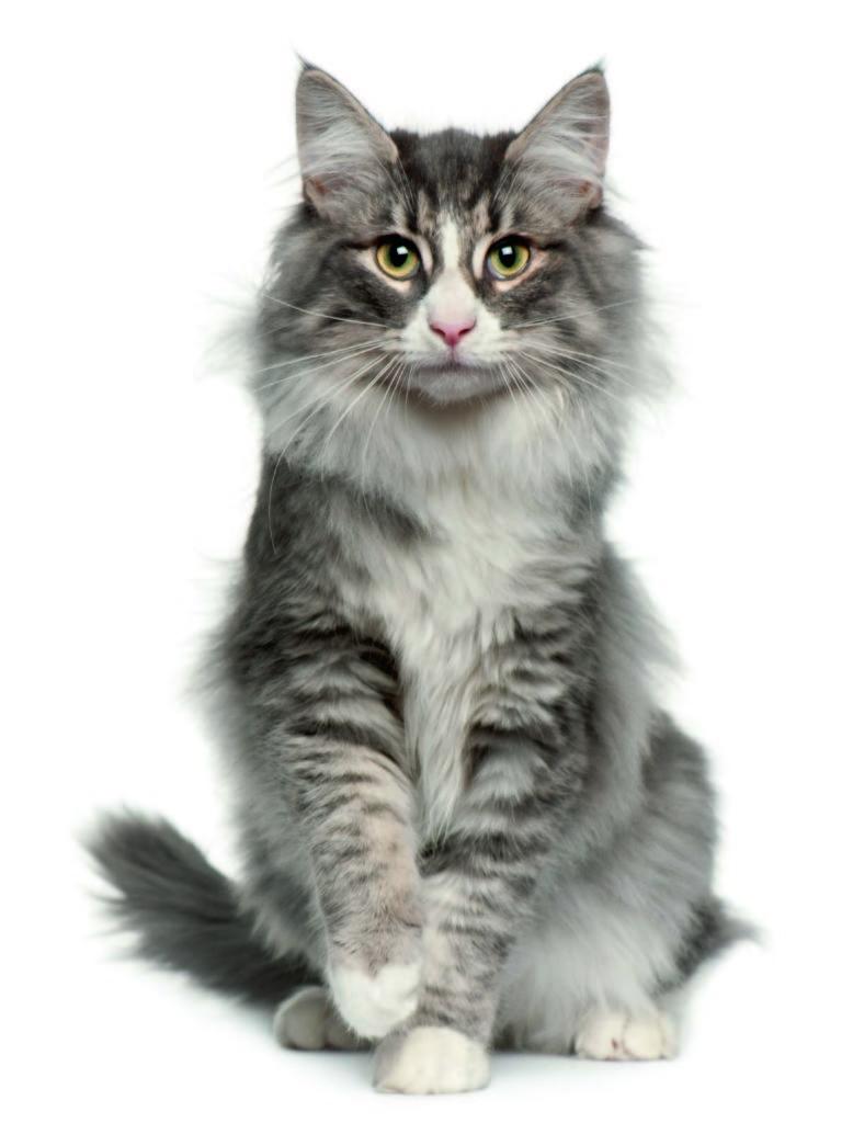 La gata que cambió de sexo