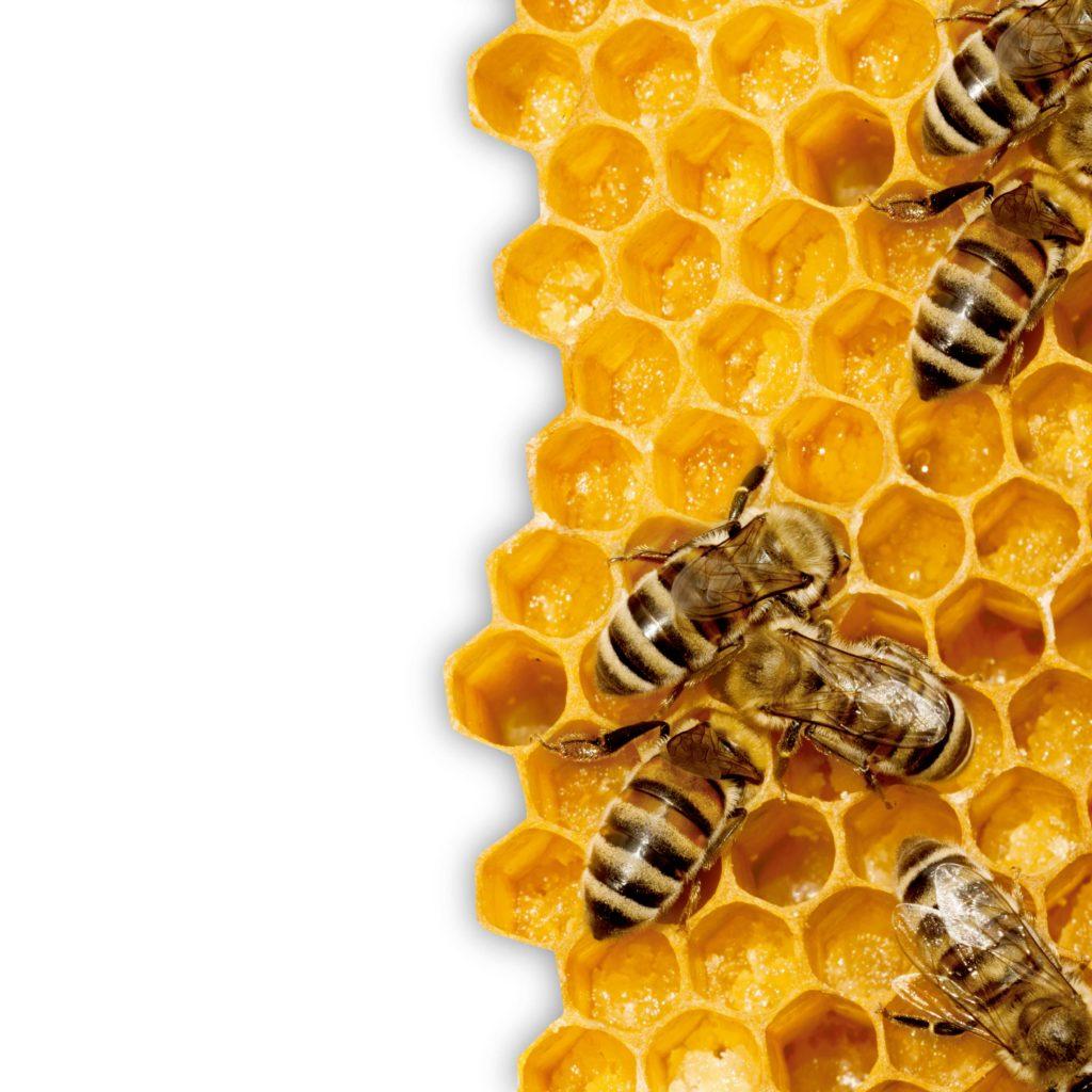 La vida de las abejas o… ¿las abejas de la vida?