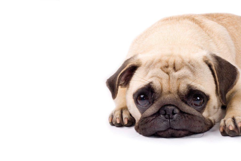 El perro epiléptico